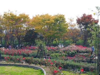 紅葉とバラ園